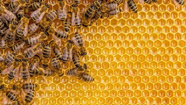 NOT JUST HONEY You should know these 4 bee products