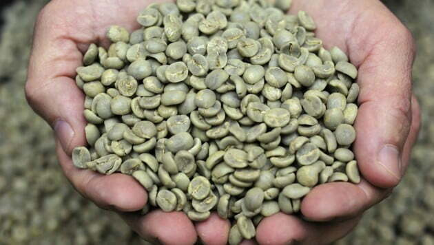 HELP YOU LOSE WEIGHT , Do you already know green coffee?